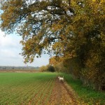 Photo Gallery: Our Autumn countryside